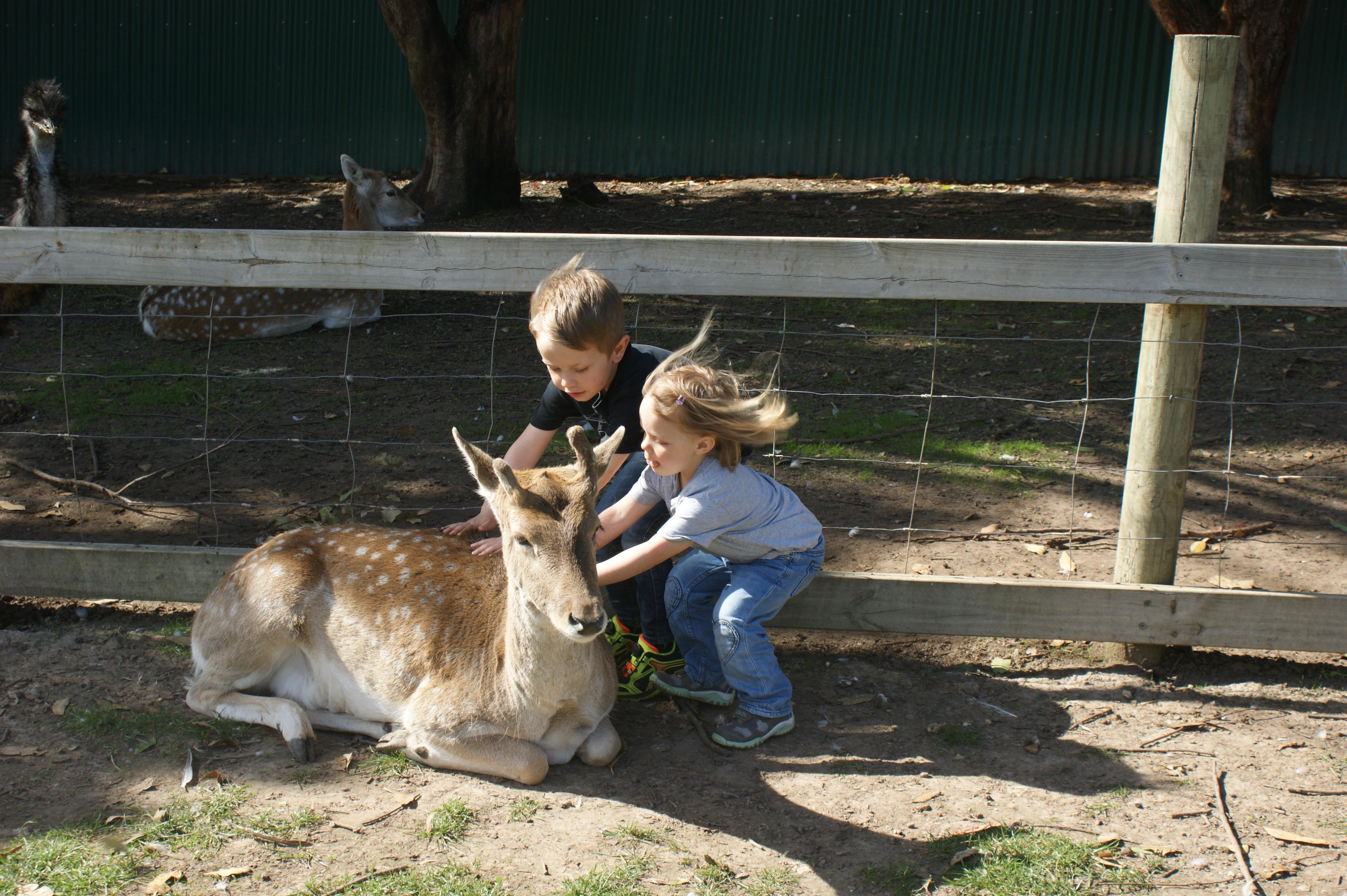 Petting Zoo Kangaroo Island